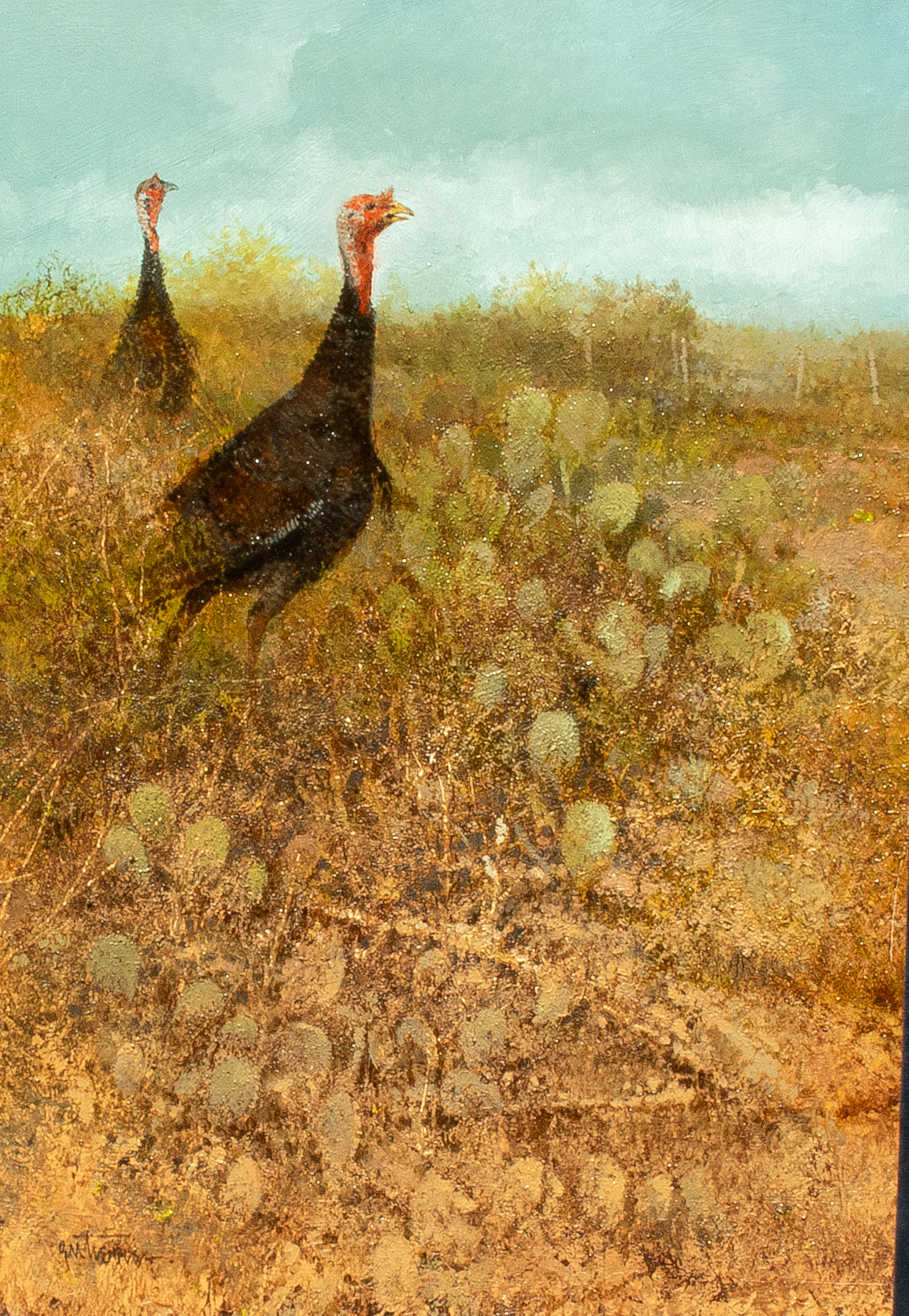South Texas Turkeys